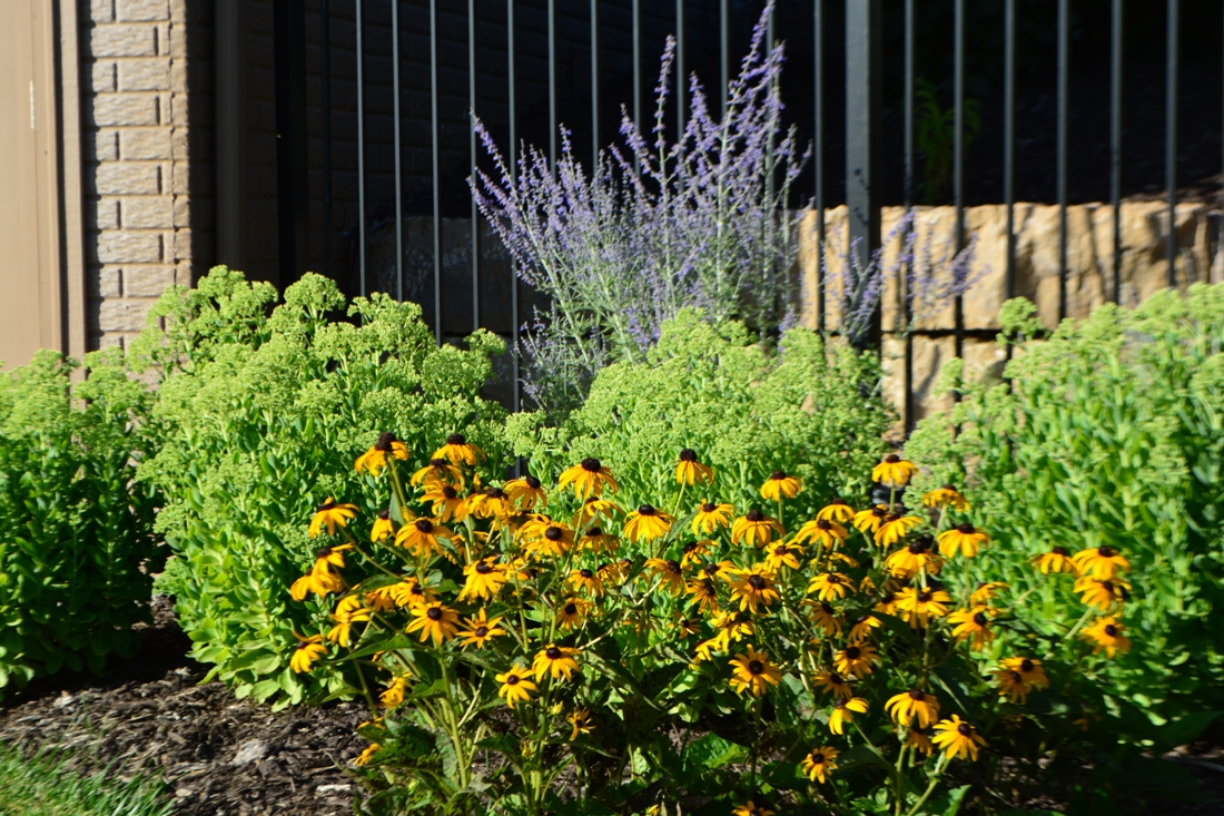 Colorful summer planting