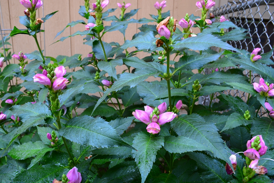 Get your landscape ready for spring. Shade planting.