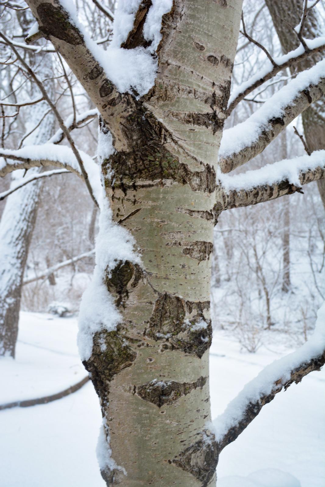 Winter Favorites 9 Stunning Shrubs And Trees Breaking