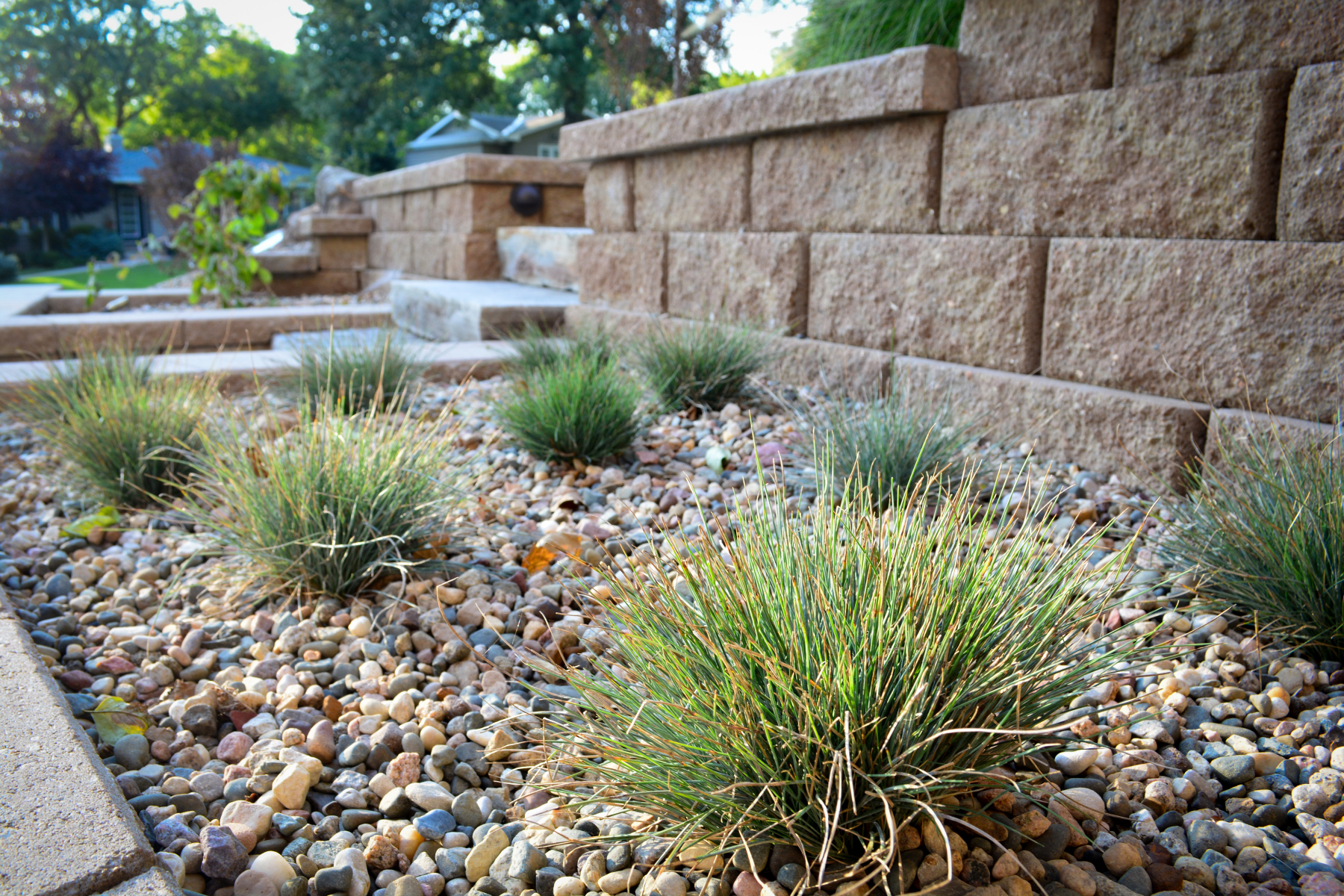 Bunch-Grasses-in-retaining-wall