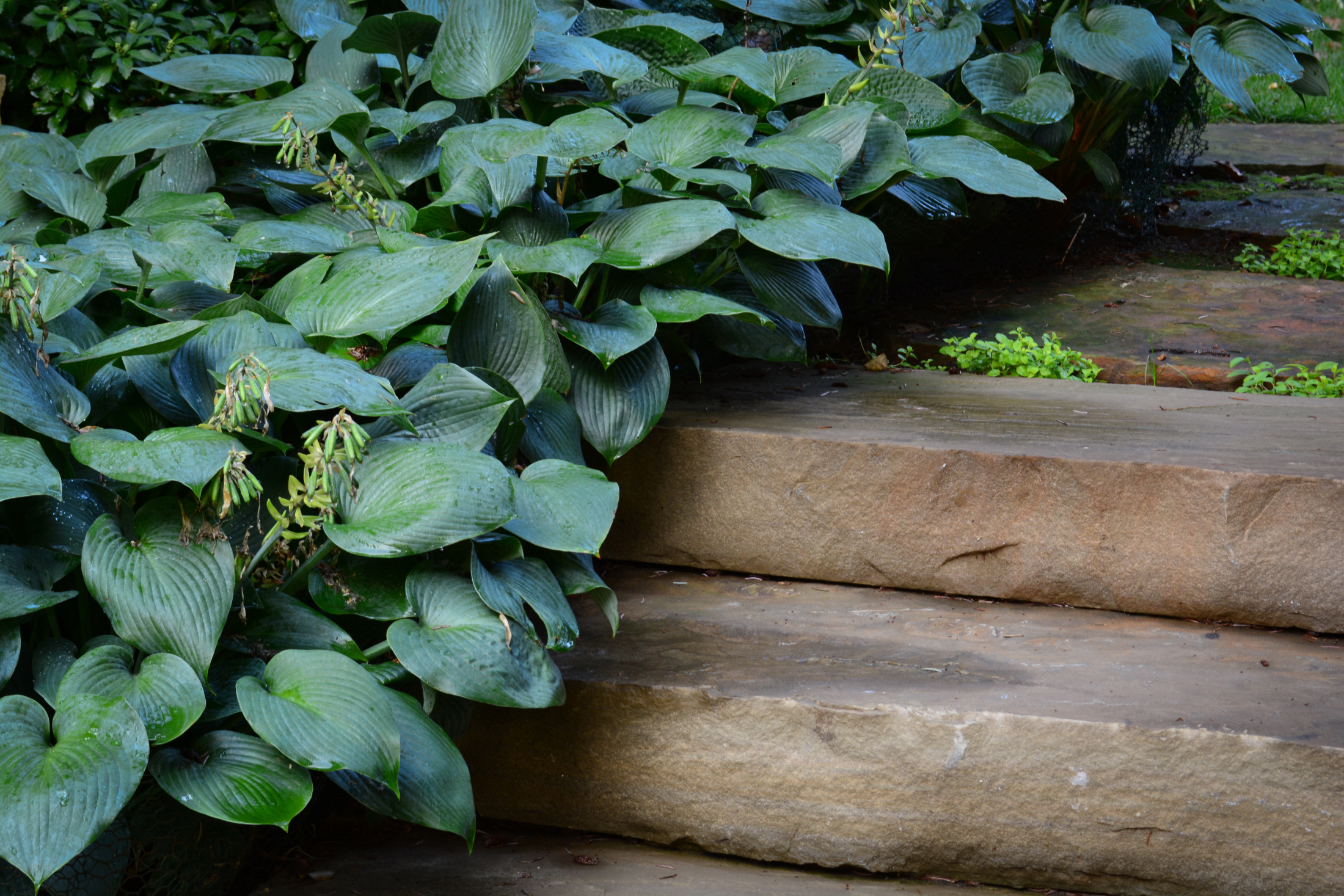 Close-up-Stairs