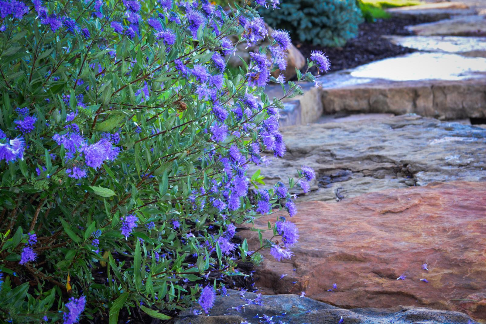 Flower-against-stone