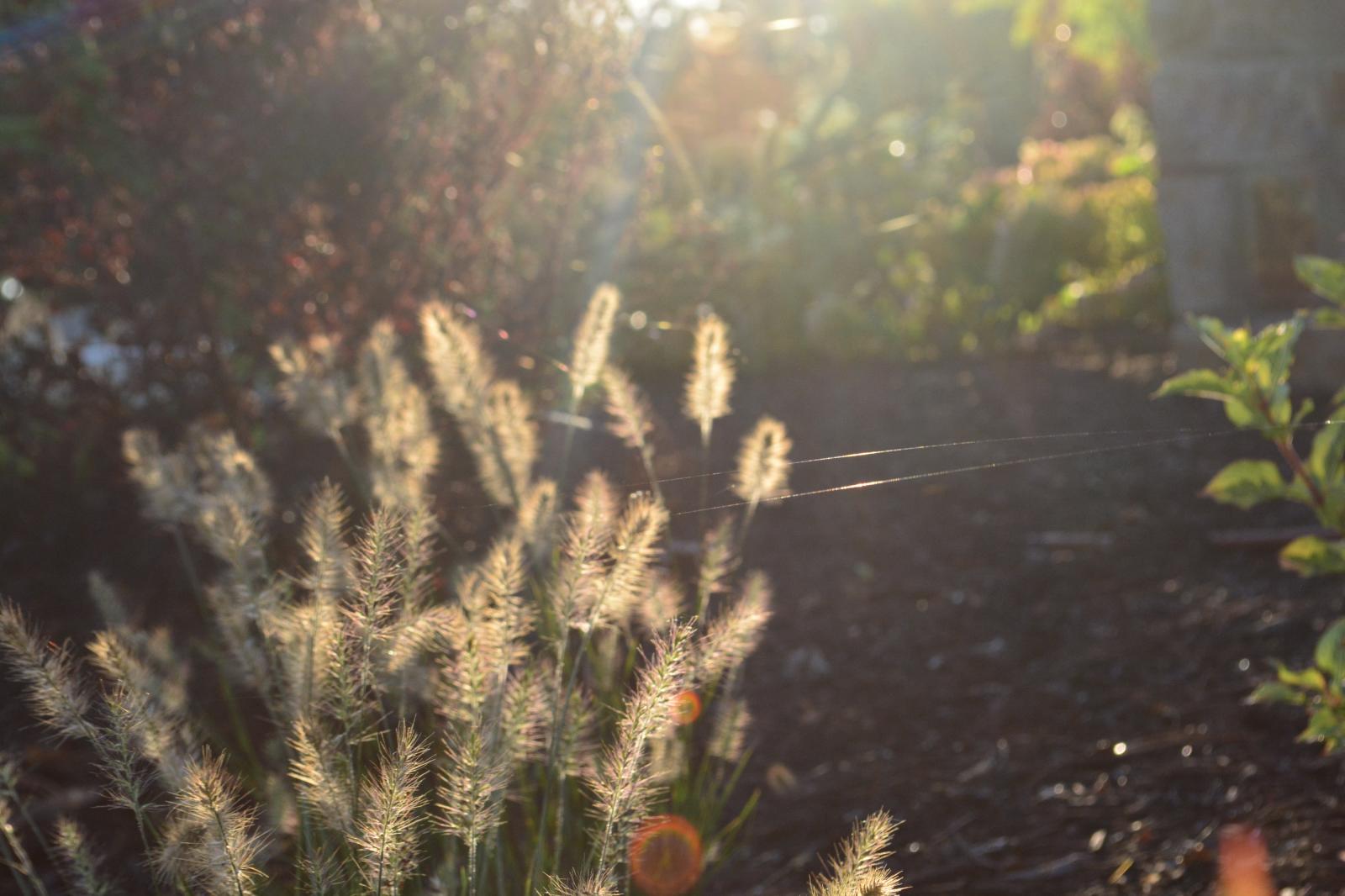Grass-in-the-sun