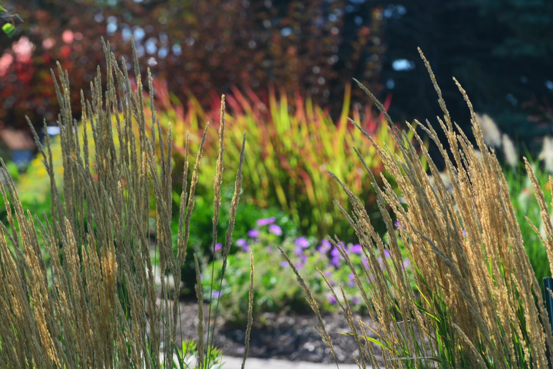 Grass-on-grass