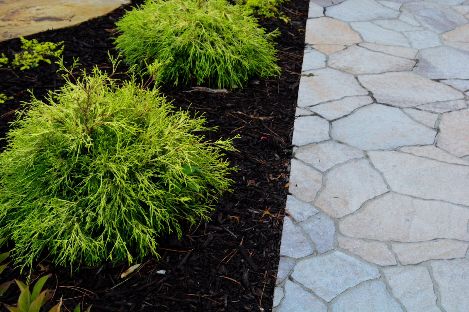 Paver-and-Plantings
