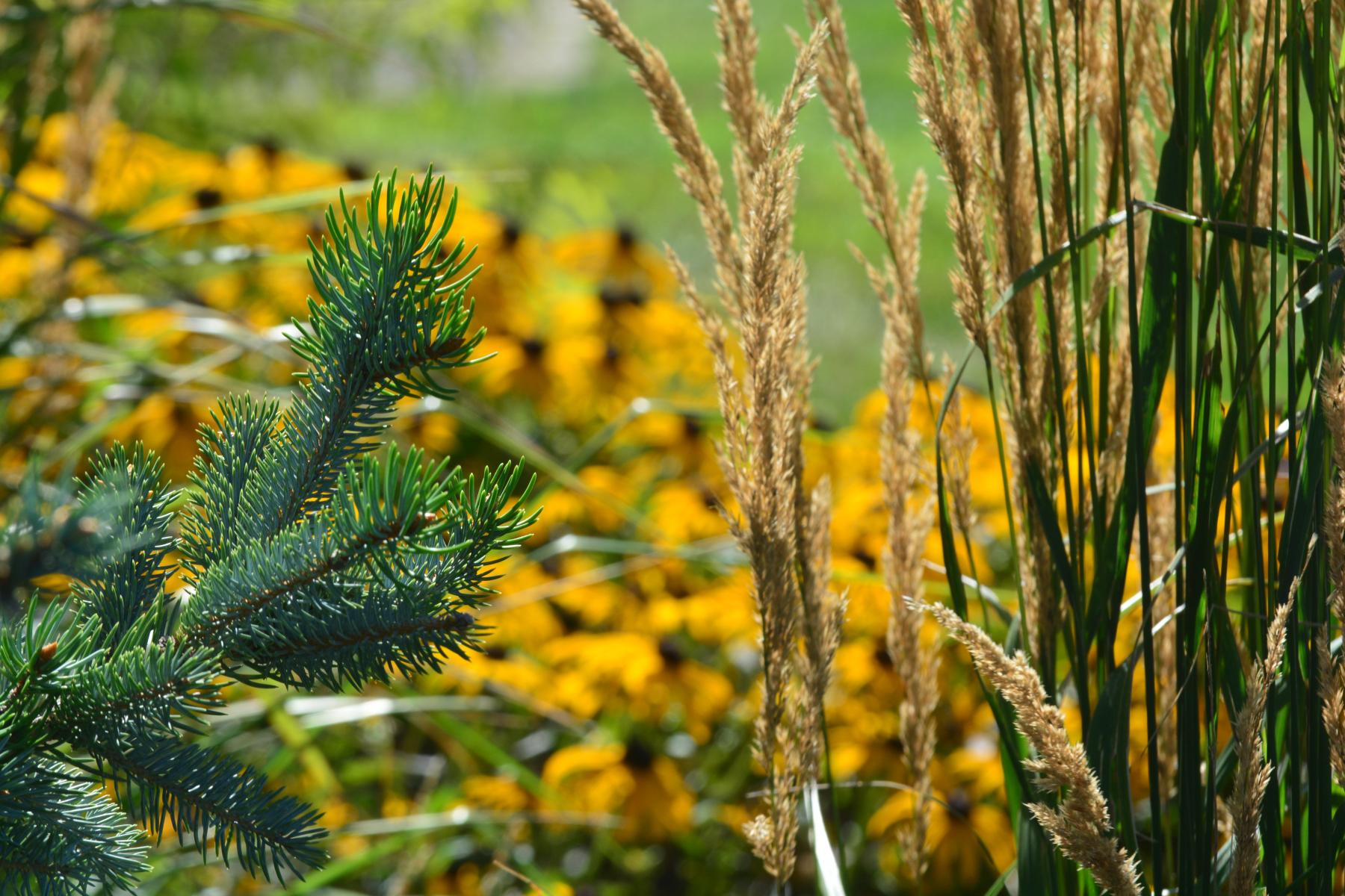 Plant-Combination-