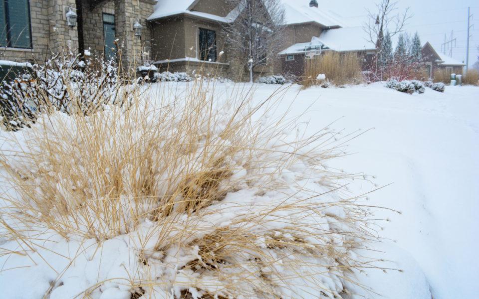 Ornamental grasses in winter should i cut them back or leave them ornamental grasses in winter should i cut them back or leave them workwithnaturefo