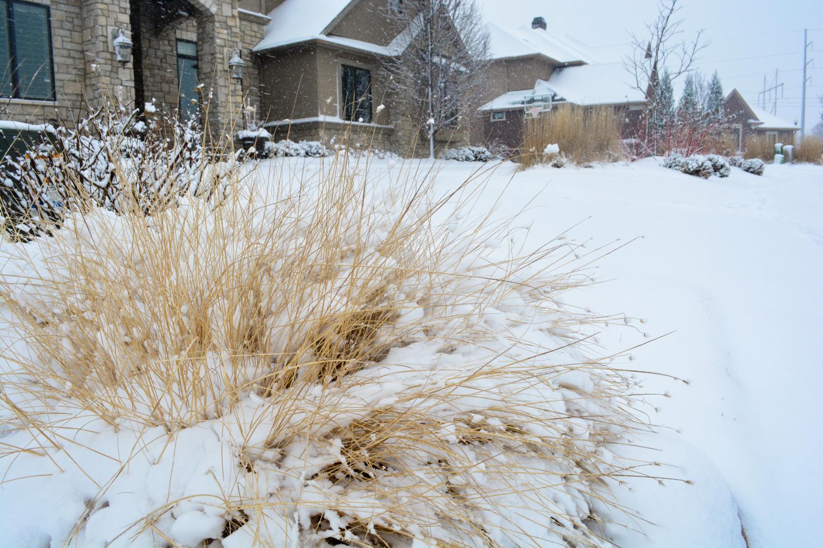 Prairie-Drop-seed-Winter-3