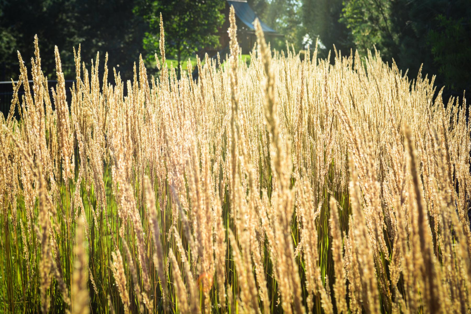 Stanton-Grass-2