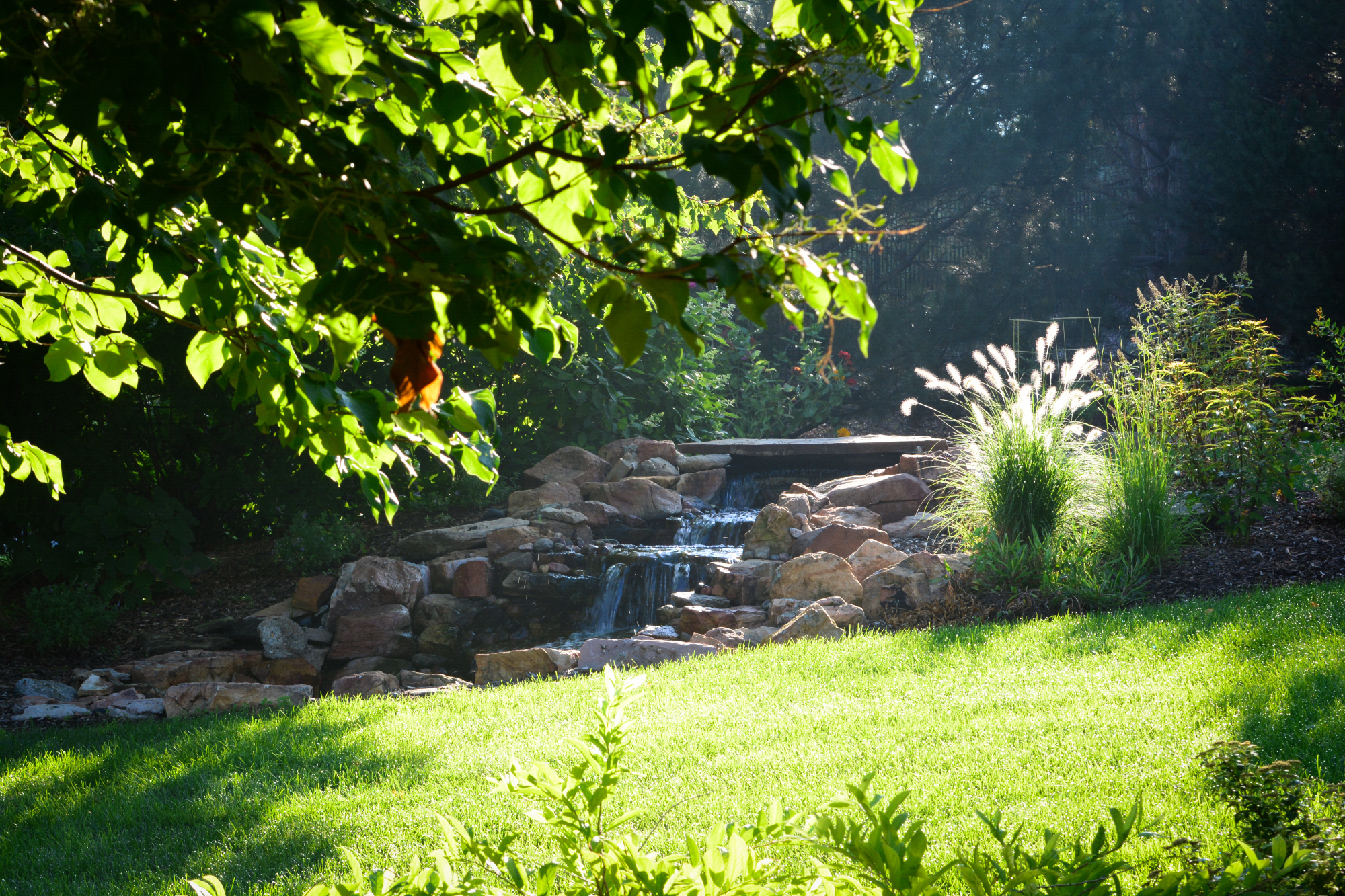 Water-feature-planting